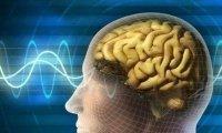 计算机声音模拟:连接大脑和真实世界